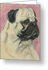 Pugnacious Greeting Card