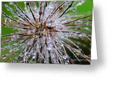 Pulsatilla Vulgaris Flower Design Greeting Card