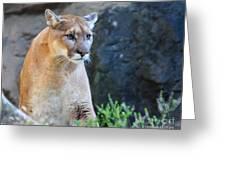 Puma On The Watch Greeting Card