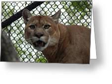Puma Stare Greeting Card