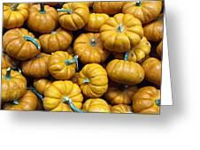 Pumpkin Galore. Greeting Card