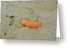 Pumpkin In The Sand Greeting Card