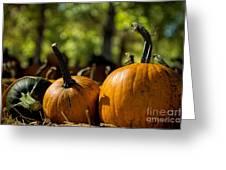 Pumpkin Line Up Greeting Card