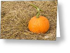 Pumpkin On The Straw  Greeting Card