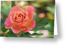 Pumpkin Patch Rose Greeting Card