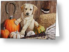 Pumpkin Puppy Greeting Card by Crista Forest