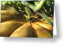 Pumpkin Ripe Greeting Card