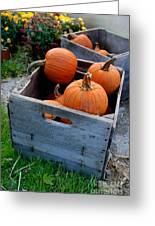Pumpkins In Wooden Crates Greeting Card