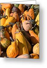 Pumpkins Up Close Greeting Card
