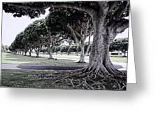 Punchbowl Cemetery - Hawaii Greeting Card by Daniel Hagerman
