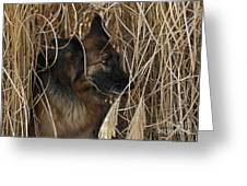 Pup Hiding In Tall Grass Greeting Card