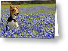 Pup In The Bluebonnets Greeting Card