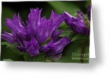 Puple Passion Greeting Card