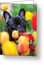 Puppie And Dog  Greeting Card