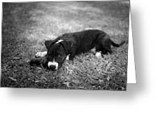 Puppy Eyes In Black And White Greeting Card