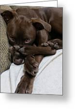 Puppy Feet Greeting Card