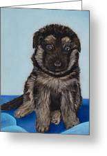 Puppy - German Shepherd Greeting Card