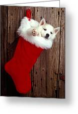 Puppy In Christmas Stocking Greeting Card