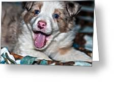 Puppy Laughter Greeting Card
