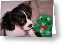 Puppy Look Greeting Card