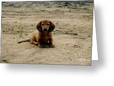 Puppy On The Beach Greeting Card