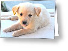 Puppy Greeting Card by Paul Sotelo