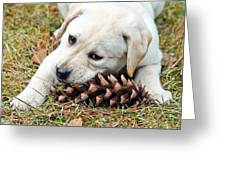 Puppy With Pine Cone Greeting Card