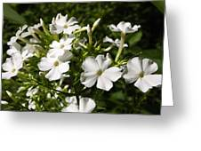 Pure And Simple Elegance Greeting Card