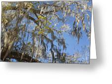 Pure Florida - Spanish Moss Greeting Card by Christine Till