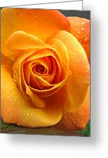 Pure Gold - Roses From The Garden Greeting Card