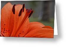 Pure Orange  Greeting Card