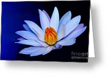 Pure White On Blue Greeting Card