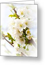 Purity In Nature Greeting Card