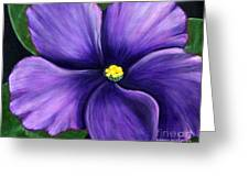 Purple African Violet Greeting Card