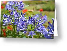 Purple Agapanthas Greeting Card