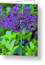 Purple Allium Flower Greeting Card