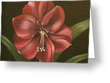 Purple Amaryllis Greeting Card