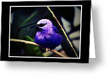 Purple And Blue Robin Greeting Card