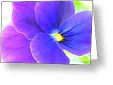 Purple And Blue Viola Greeting Card