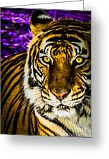 Purple And Gold Tiger Greeting Card