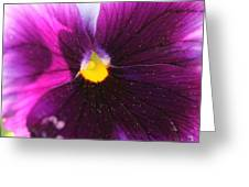 Purple And Pollen Greeting Card