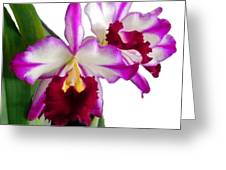 Purple And White Cattleyas Against White Space Greeting Card