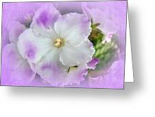 Purple And White Fancy African Violets Greeting Card