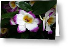 Purple And White Flower At Biltmore Estate Greeting Card