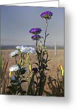 Purple And White Flowers In The Sun Greeting Card