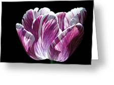 Purple And White Marbled Tulip Greeting Card by Rona Black