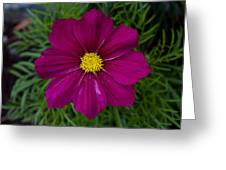 Purple And Yellow Brilliance Greeting Card