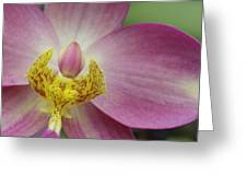 Purple And Yellow Orchid Greeting Card