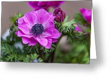 Purple Anemone. Flowers Of Holland Greeting Card