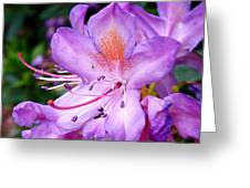 Purple Azalea Greeting Card